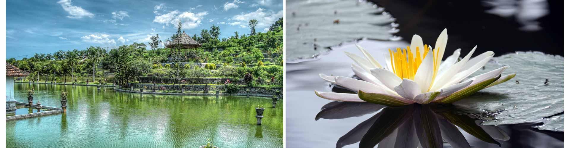 reisetagebuch bali lotus