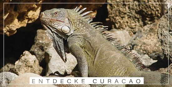 Calmondo Curacao Karibik Reiseberichte Blog