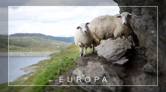 Resietagebuch zum Selberschreiben Europa - Irland
