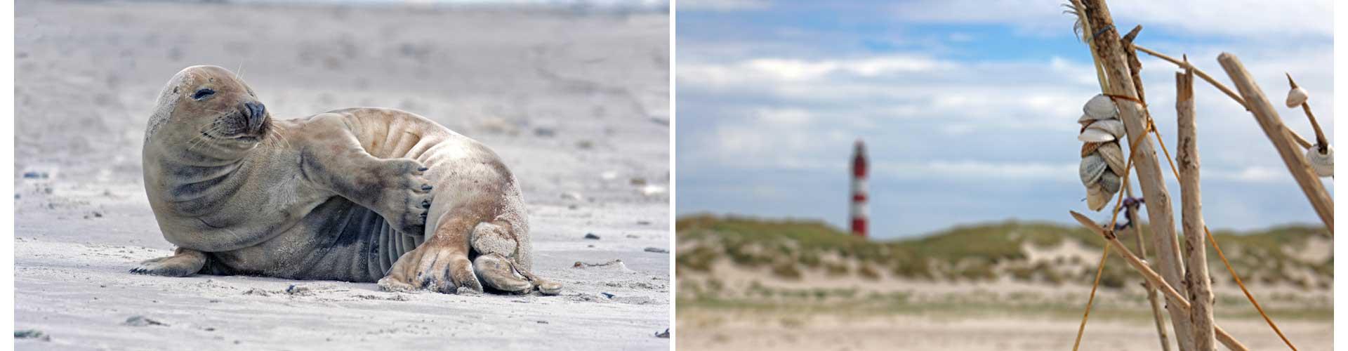 Doppelbild reisetagebuch deutschland selberschreiben robbe amrum ostsee nordsee