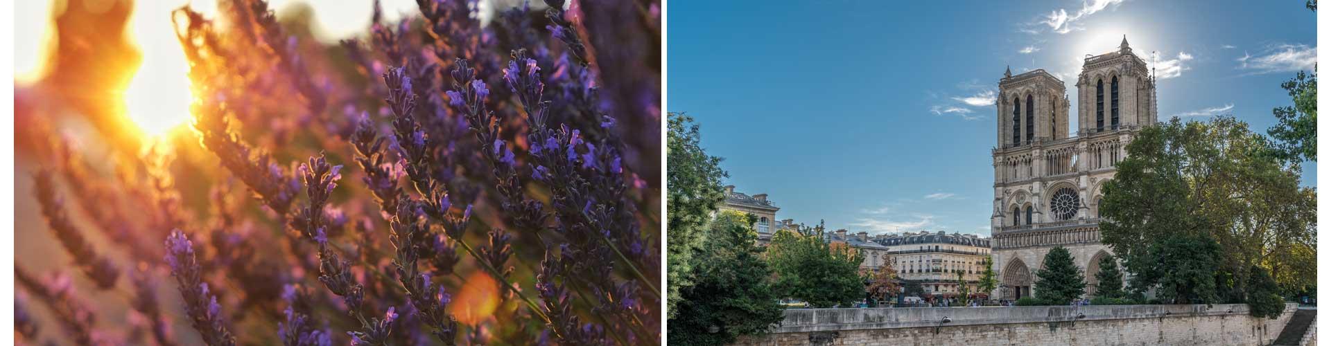 Calmondo frankreich reisetagebuch notre dame paris lavendel provence